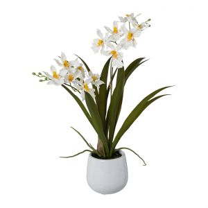 Gambia orchid in a ceramic pot 41 cm, white