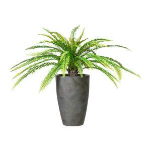 Forrest fern, ca 80cm x diameter 100cm  in ceramique vase 29x42cm grey