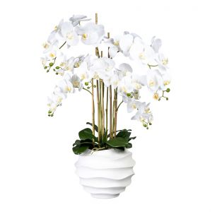 Phalaenopsis x7, approx 95cm white in a plastic pot white 30x25cm,