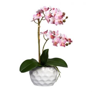 Mini-Phalaenopsis x2, approx 40cm, pink in ceramic vase white 13.5x9.5x7cm, real touch