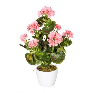 Geranium bush x7, ca 40cm rose, 26 Bl., Material UV-standing in ceramique pot 13