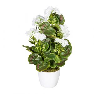 Geranium bush x7, ca 40cm white, 26 Bl., Material UV-standing in ceramique pot 1